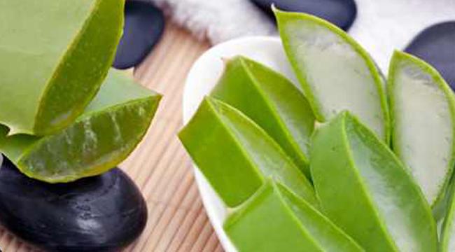 Aloe Vera – az egészség és szépség védelmében